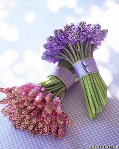 hyacinth_spr97.jpg
