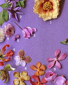 msw_spring06_petals.jpg
