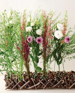 flowerbirch1-sum11mwd107158.jpg