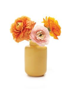 ranunculus-flowers-mwd108181.jpg