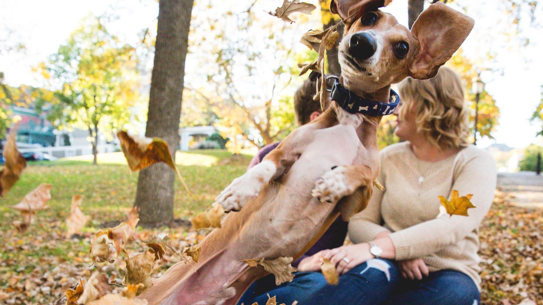 Dog Photobomb Engagement Pictures