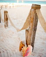 seashells and driftwood