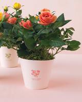 mwd105402_spr10_roses01.jpg