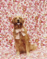 wma101773_spr06_flowerdog.jpg