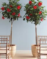 good-things-hibiscus-mwd107623.jpg