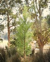 meaghan-conrad-cypress-0635-mwd109593.jpg