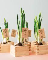 diy-floral-favors-daffodils-in-sake-cups-sp10-0615.jpg