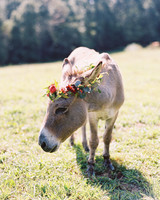 Donkey Flower Crown