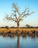 travel zimbabew linkwasha camp wildlife safari