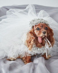EXCLUSIVE: Get a First Look at Toast the Dog's Marchesa Wedding Dress!
