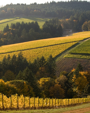 Become Husband and Wife at the Ultimate Oregon Wine Retreat