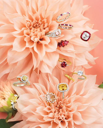 mpeach-pink-dhalias-0137-focus-d112653-red-pink-yellow-rings.jpg