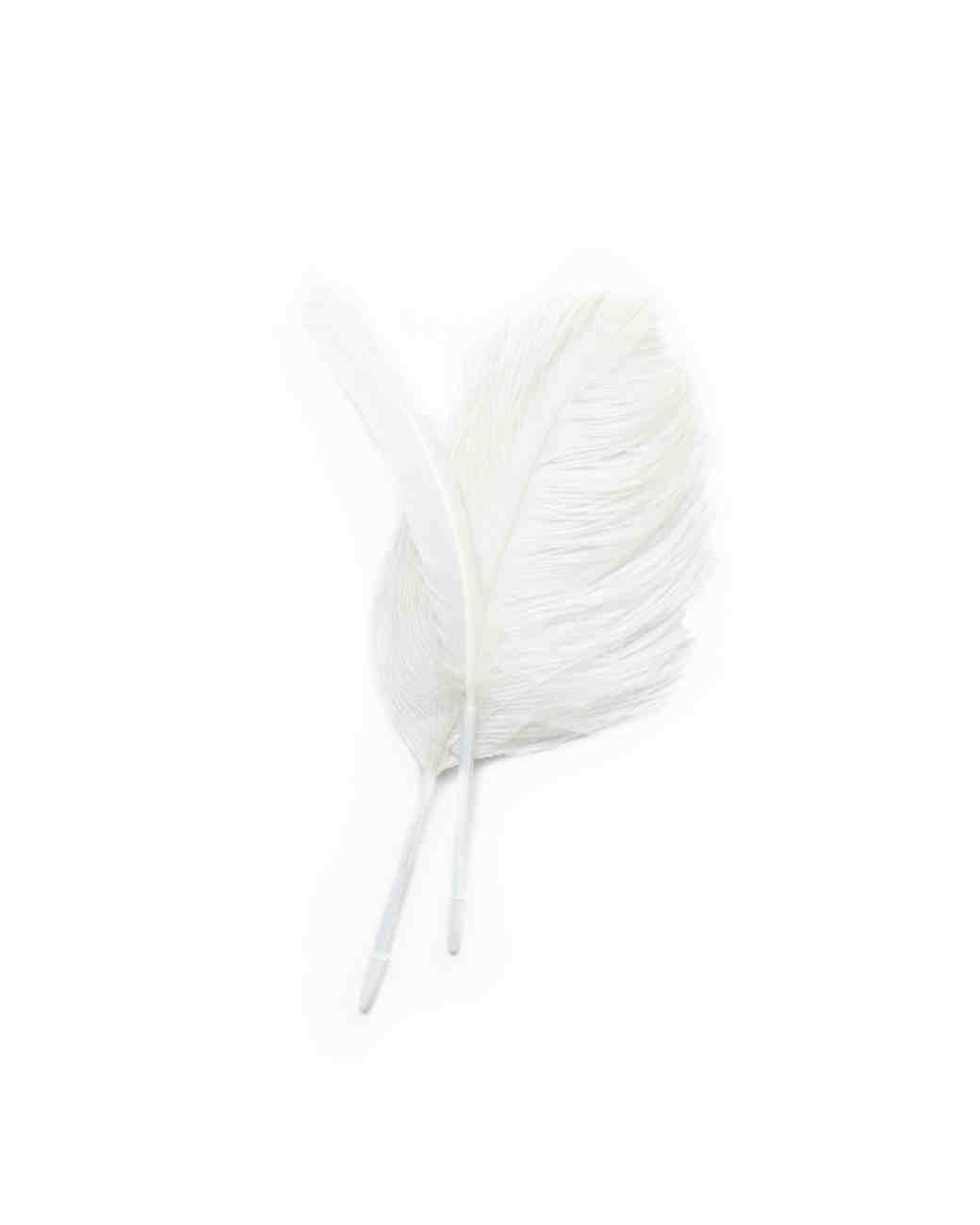 feather-wd108931.jpg