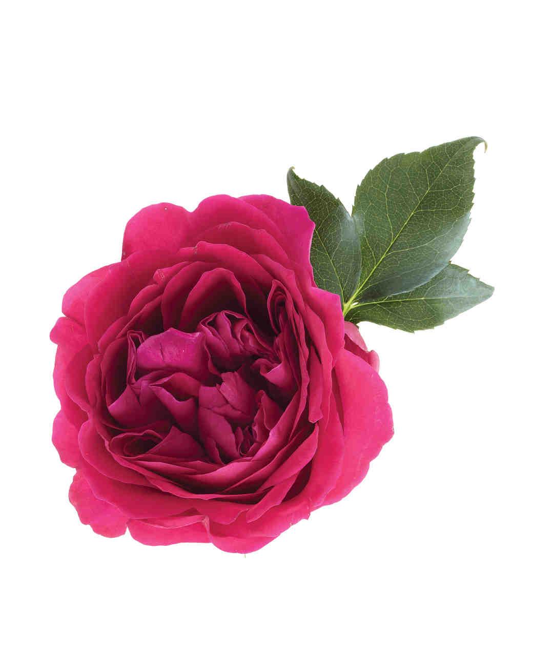 flower-0811mwd107539.jpg