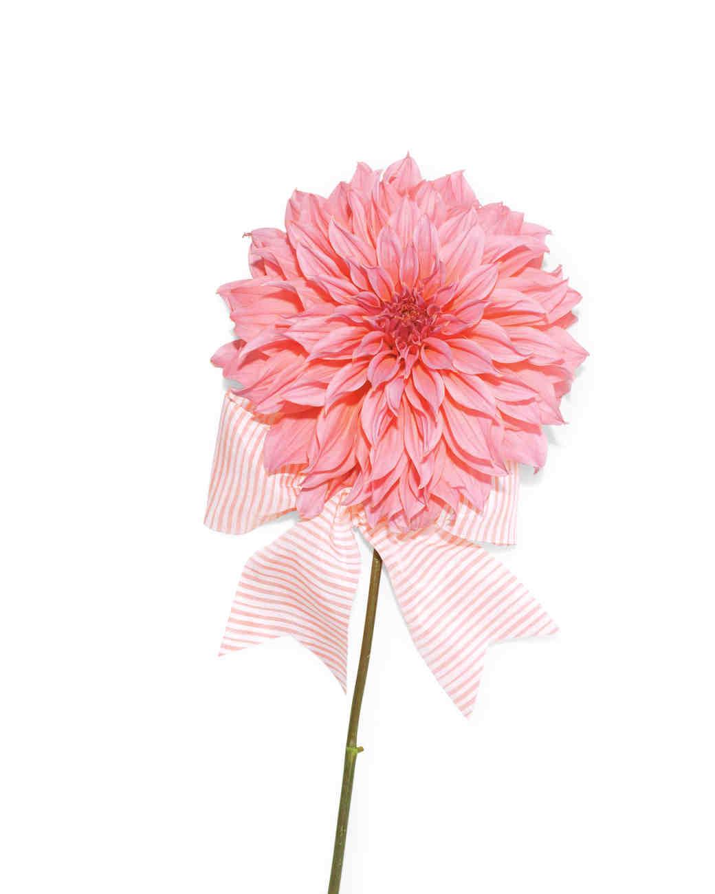 flower-115-mwd110687.jpg