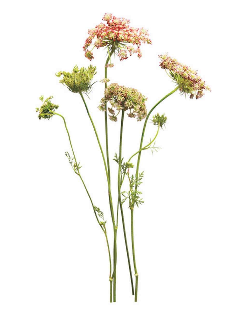 flowers-sum11mwd107158.jpg