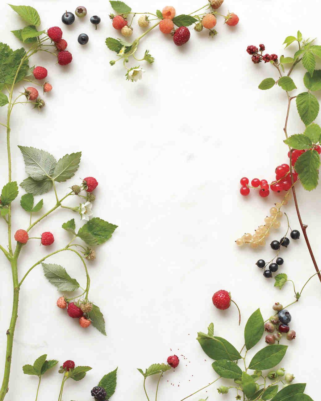 berries-opener-mwd107768.jpg