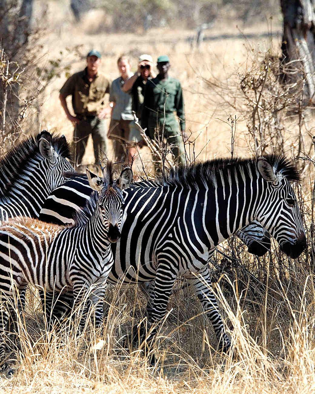 honeymoons-safari-ms107785.jpg