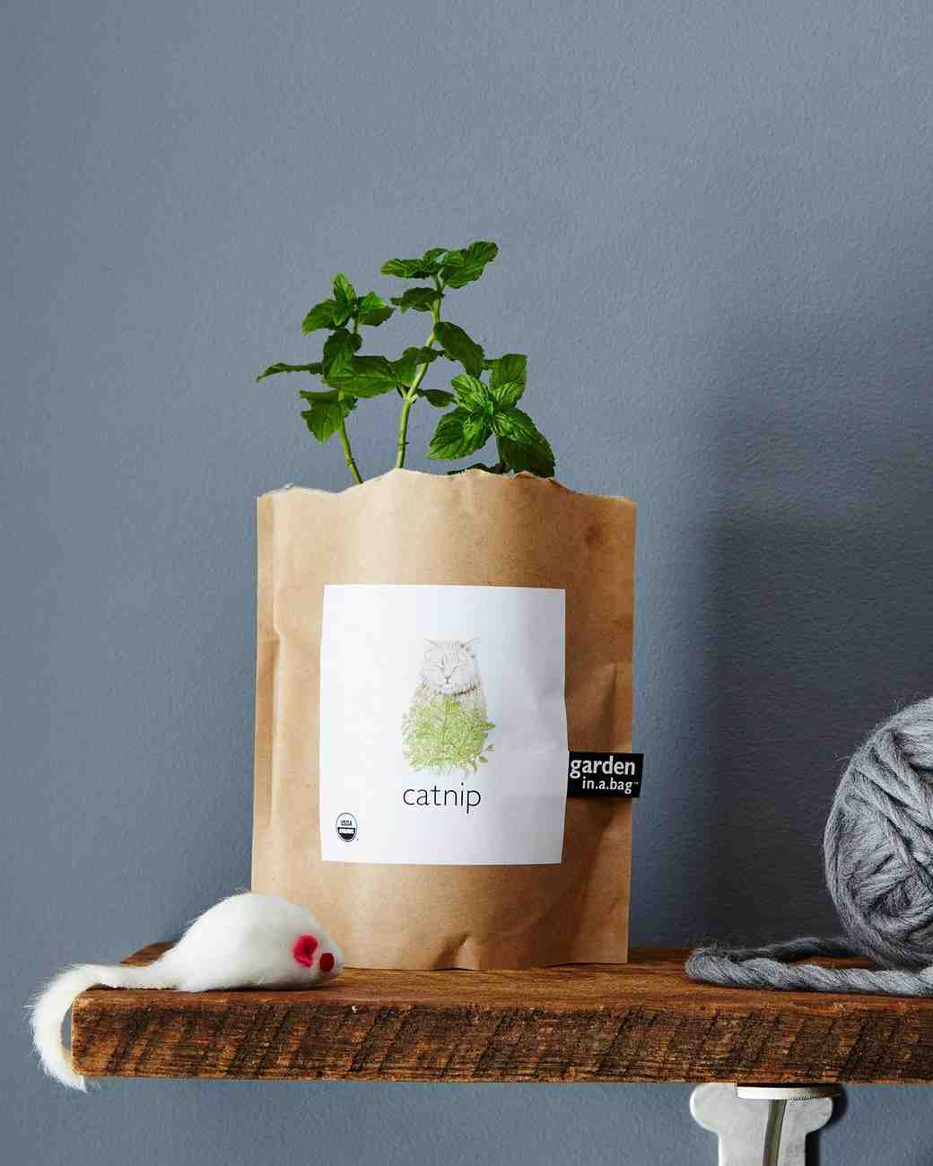 garden in a bag catnip