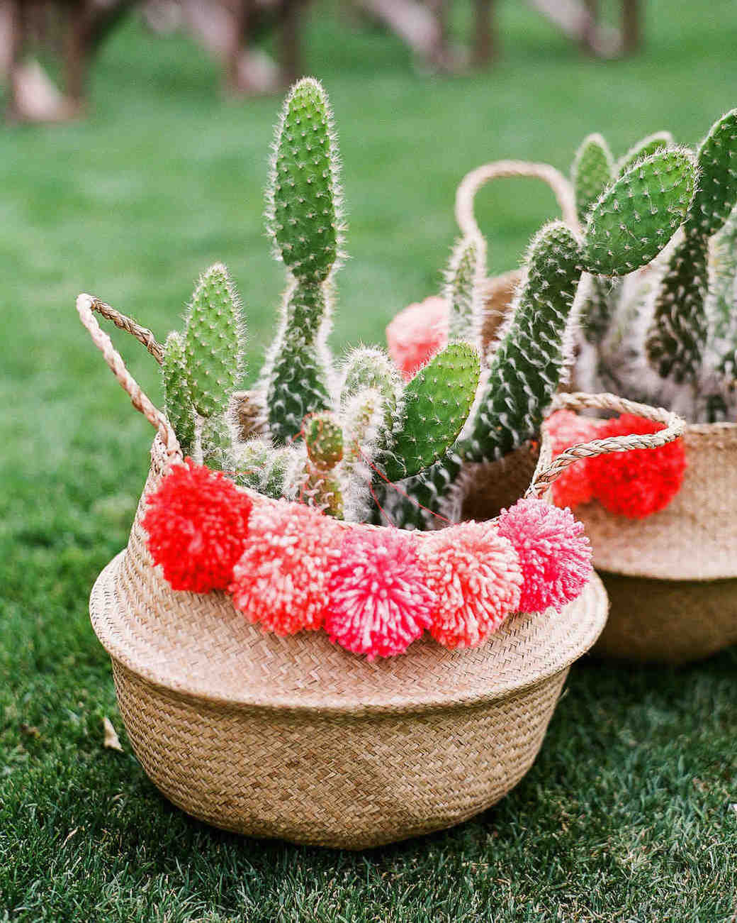 Baskets with Cacti
