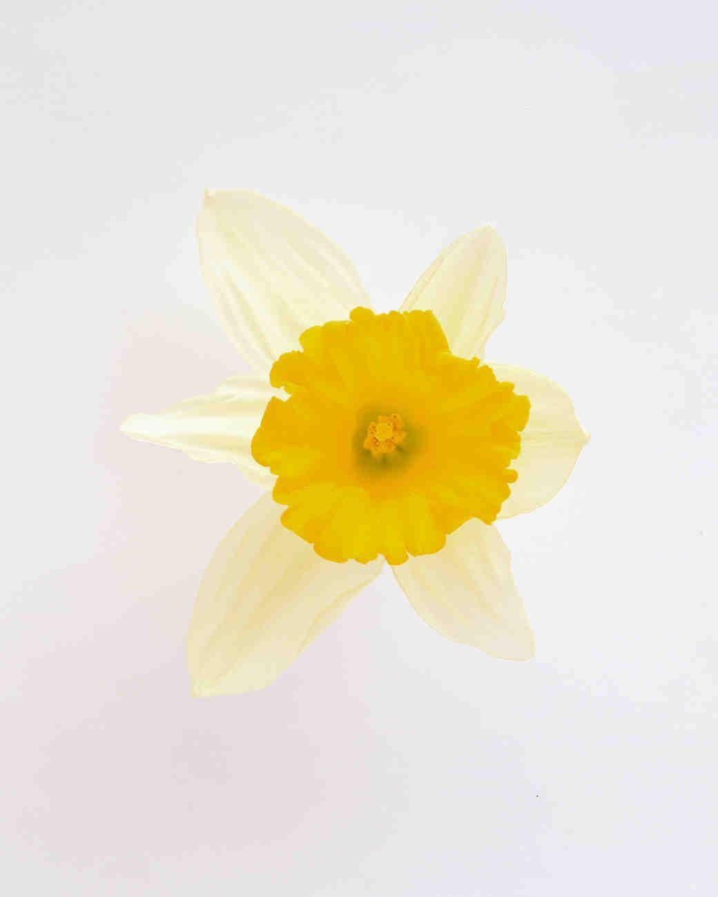 flower-glossary-daffodil-a98432-0415.jpg