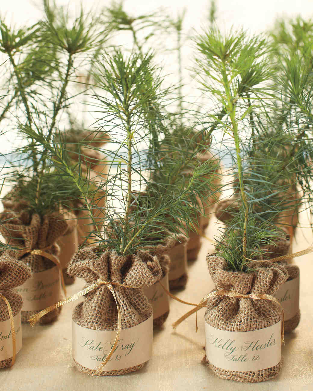Saplings in Burlap Sacks