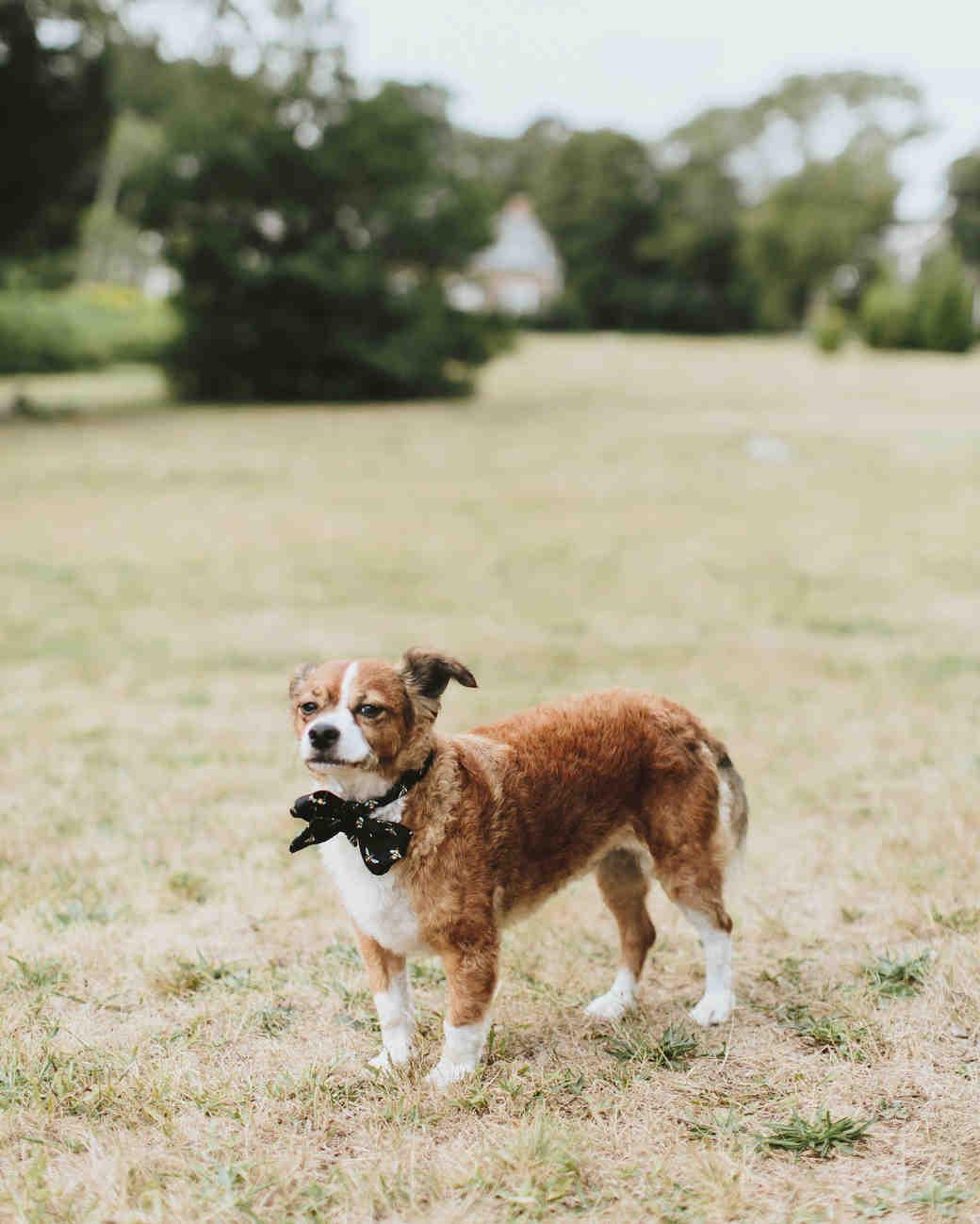 hadley corey wedding dog