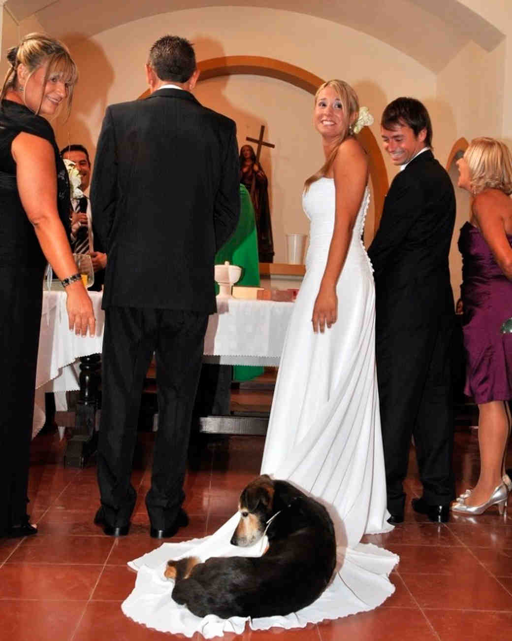 hilarious-wedding-photos-dog-on-dress-1115.jpg