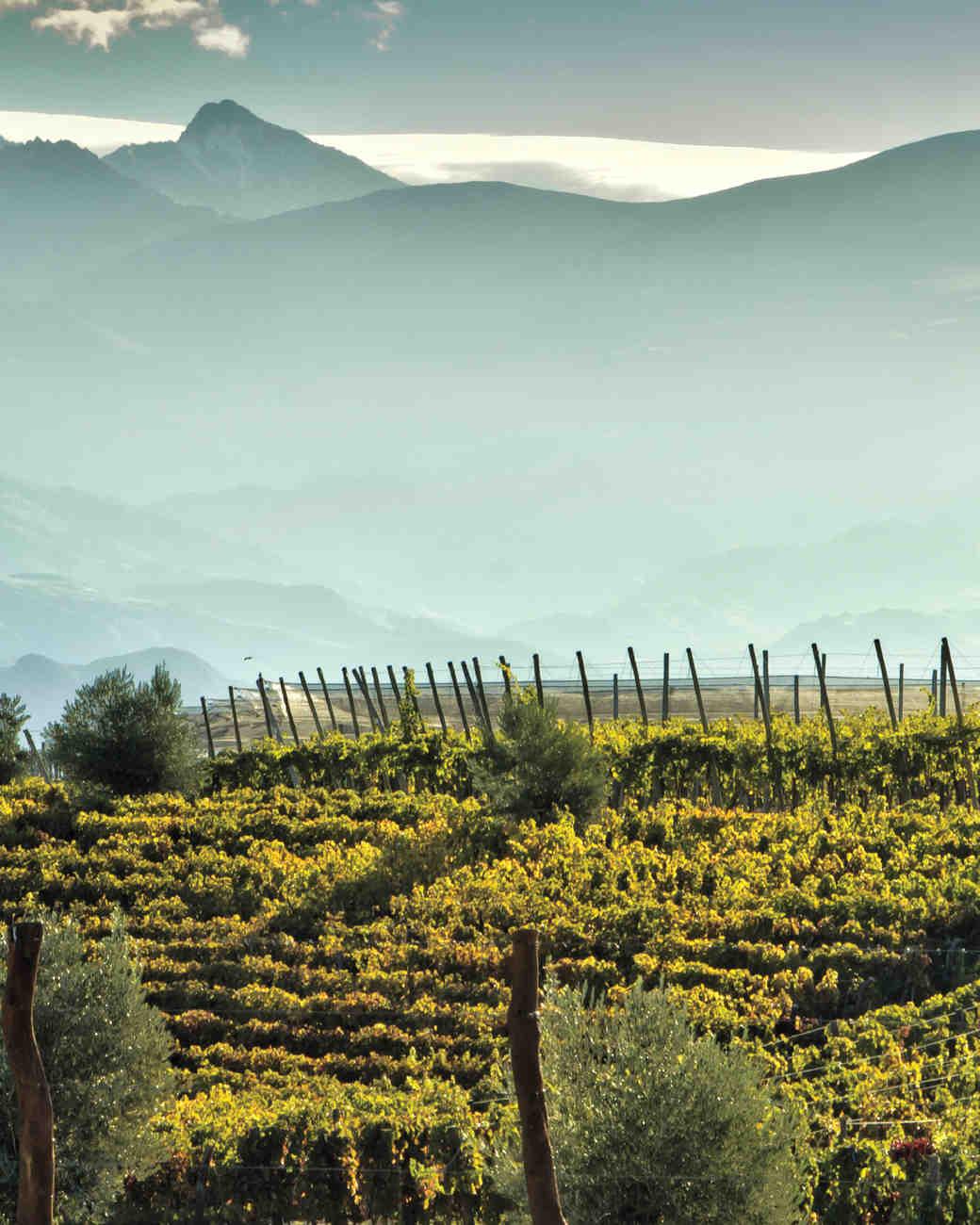 vineyard-istock-000043735518-large-s112566.jpg