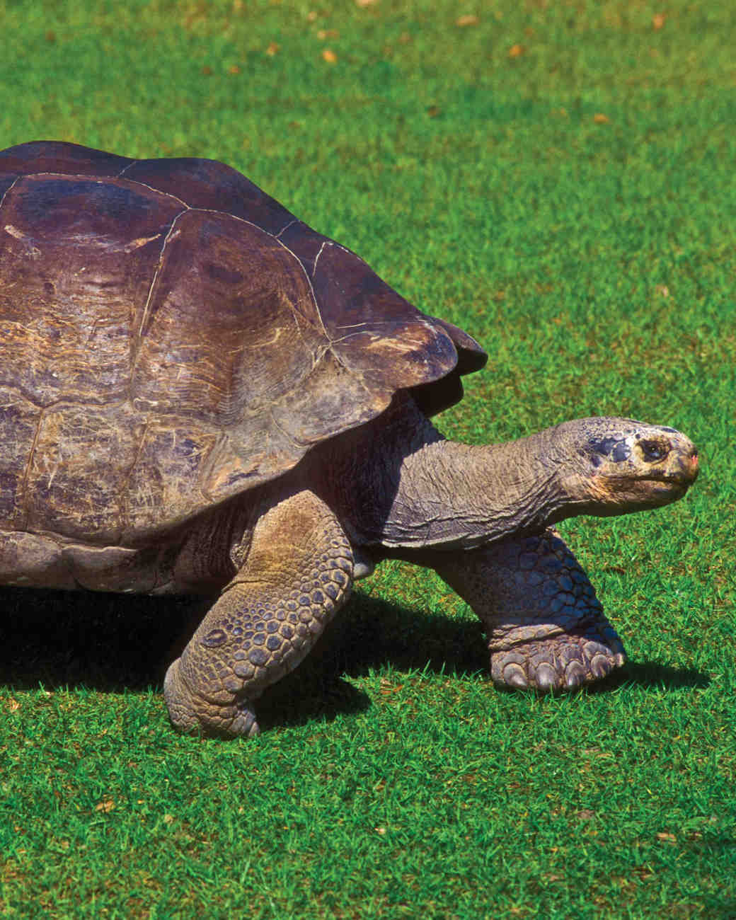 travel-new-places-galapagos-giant-tortoises.jpg