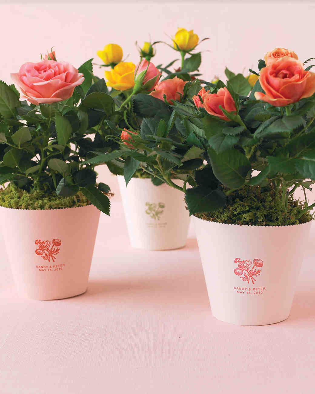 floral and plant favors to diy for your big day martha stewart weddings - Mini Roses Care Indoor
