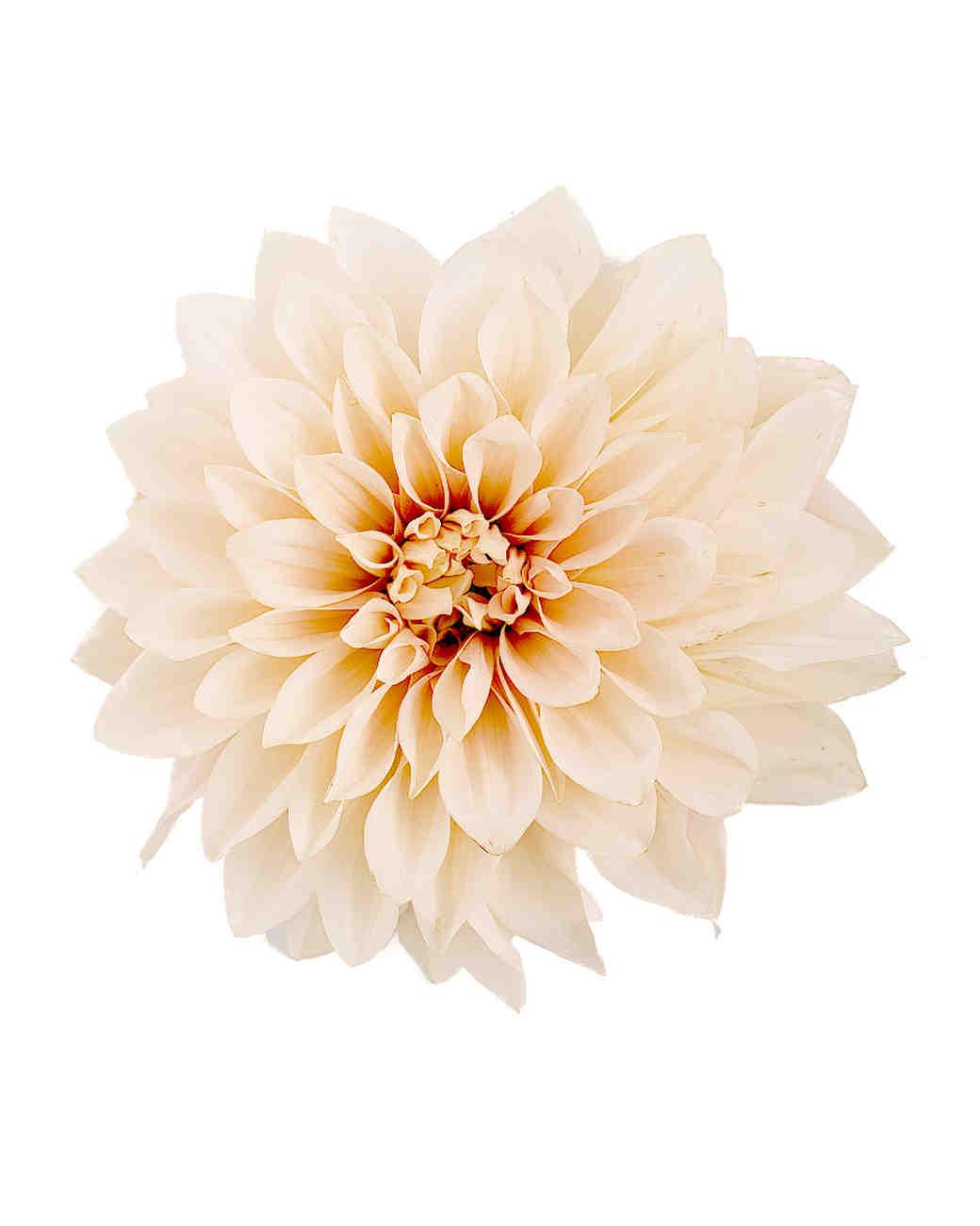 Flower Meanings Diy Interior Floral Design