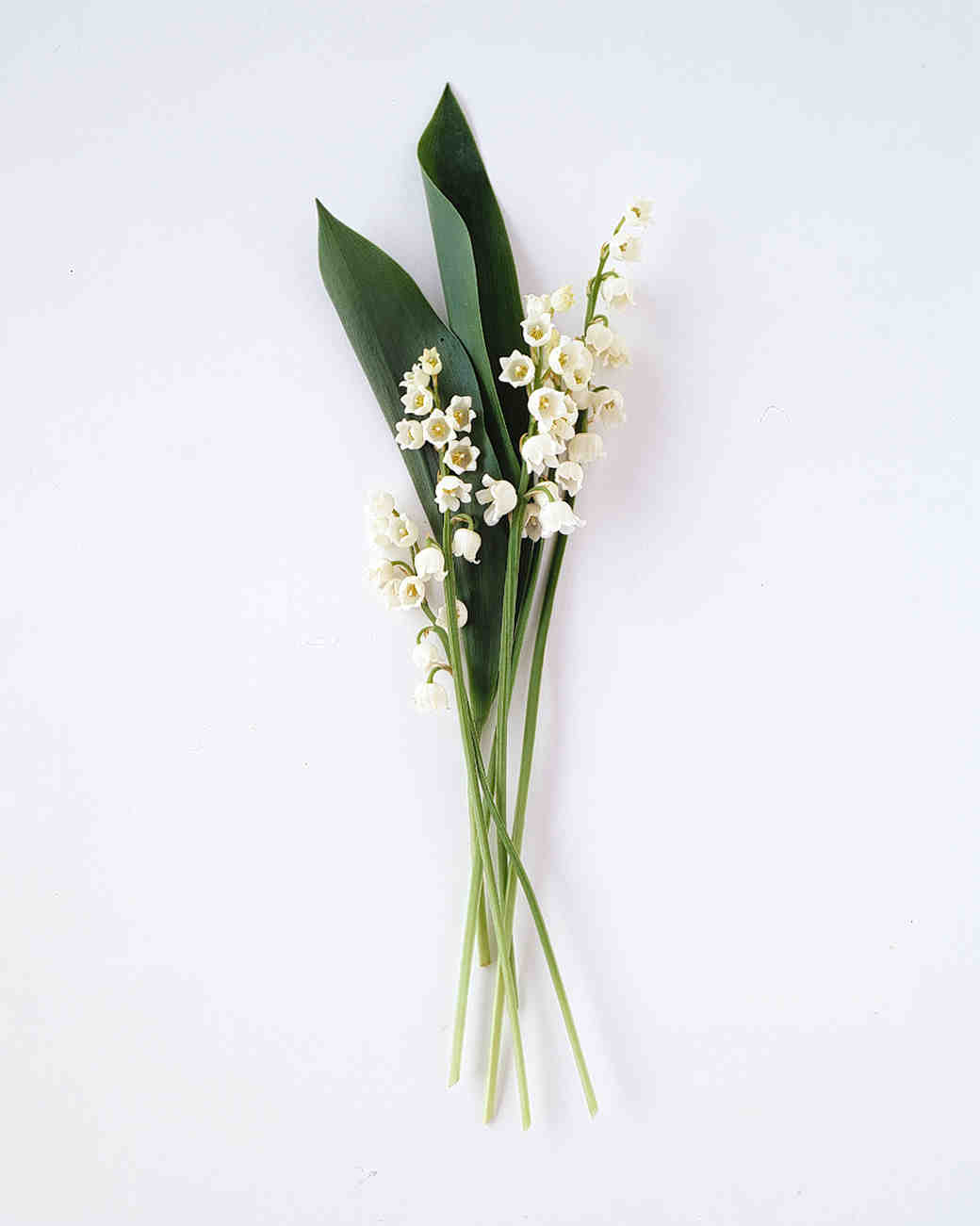 flower-glossary-lily-of-the-valley-a98432-0415.jpg