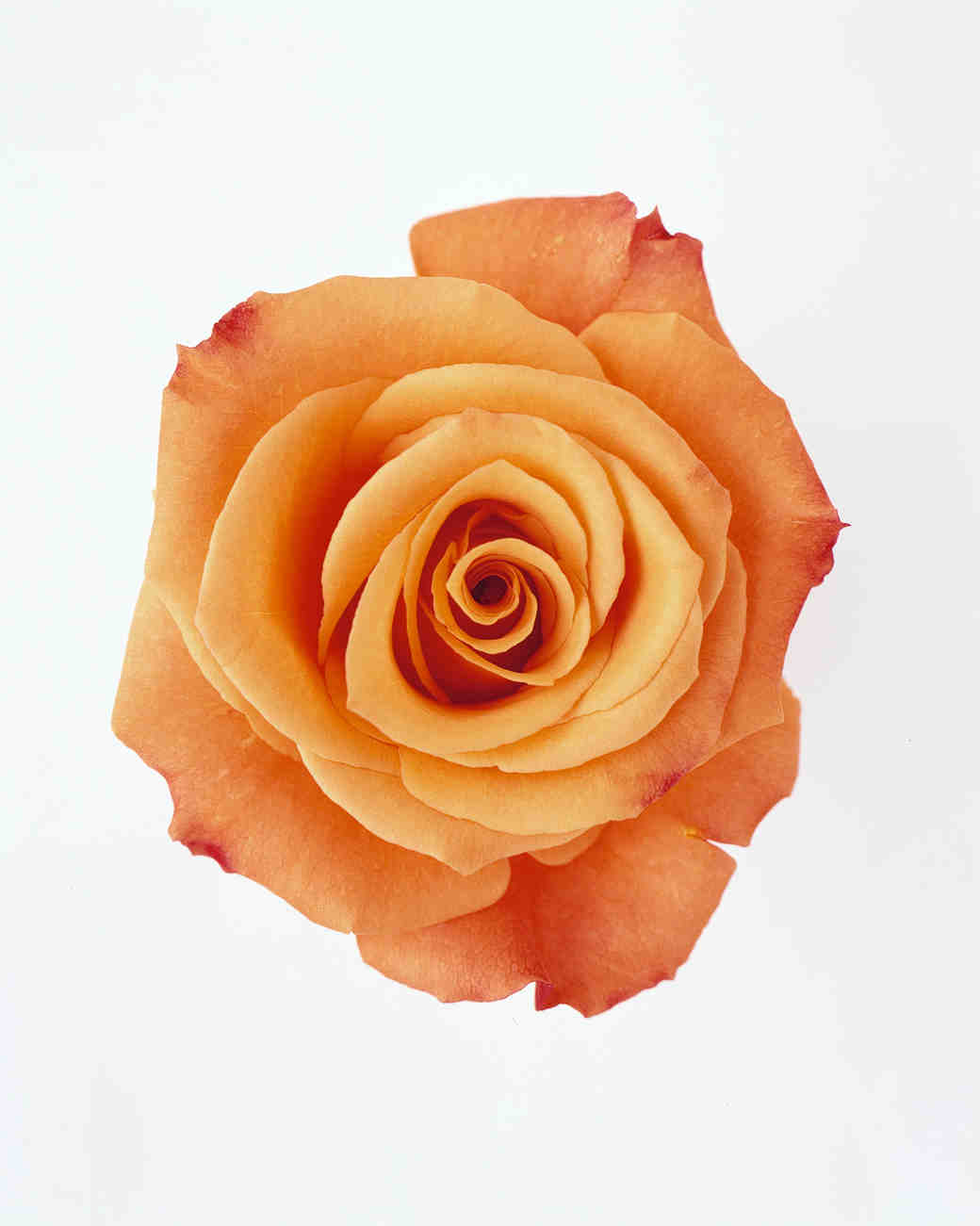 Your ultimate guide to flower meanings martha stewart for The meaning of orange roses