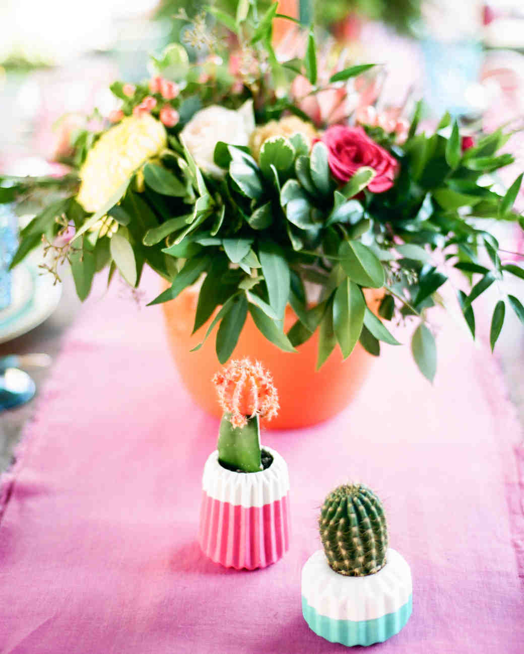 cactus and potted flower
