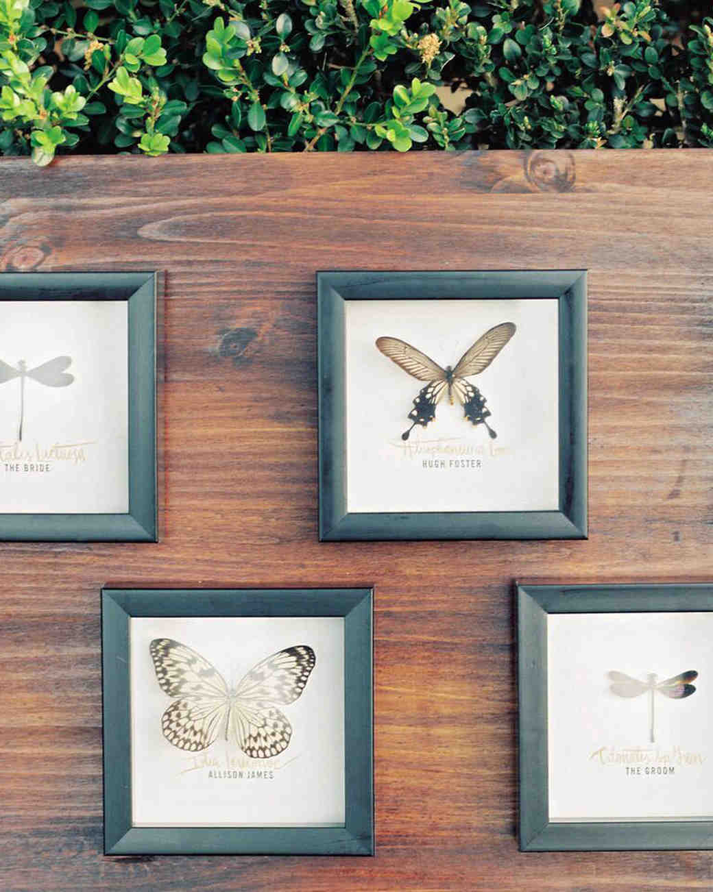 decor alternatives preserved insects display