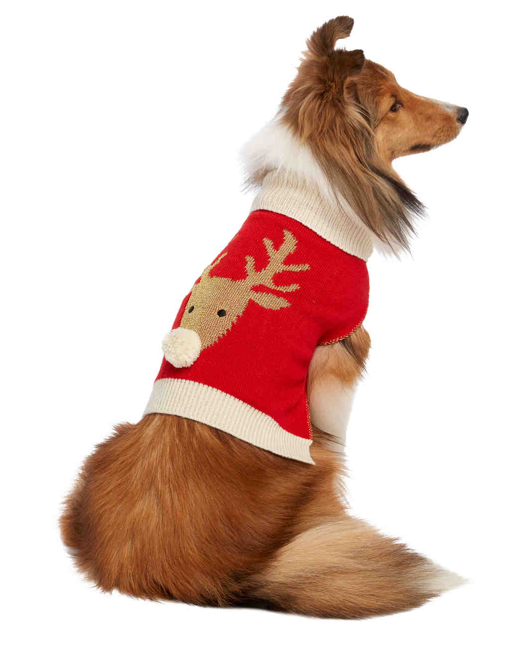 dog reindeer sweater
