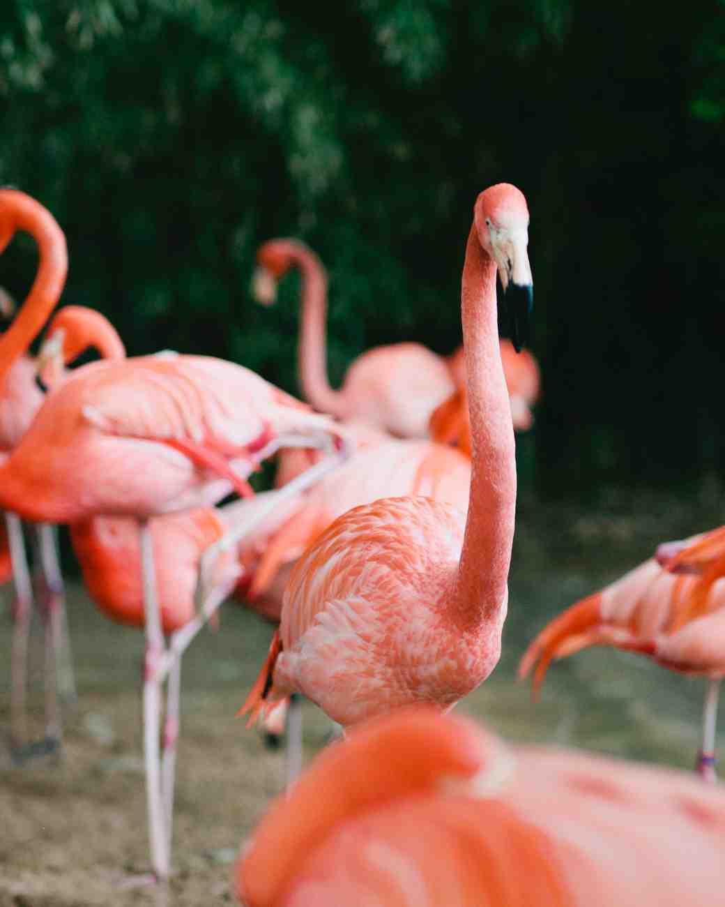 holly-john-wedding-texas-flamingos-085-s112833-0516.jpg