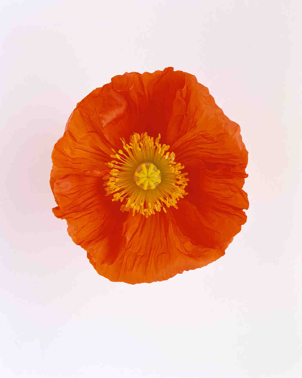 flower-glossary-poppy-happy-or-simona-red-a98432-0415.jpg