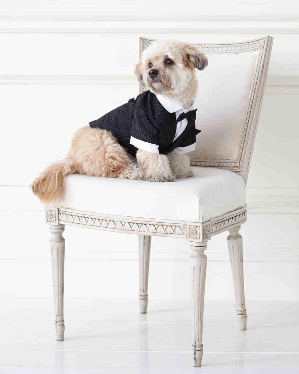wedding-pet-clothes-mspets-wedding-tuxedo-chair1-0515.jpg