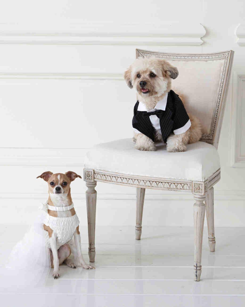 wedding-pet-clothes-mspets-wedding-bride-and-groom2-0515.jpg
