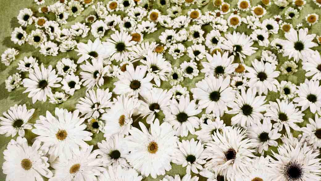 white wild flowers mums daisies dahlias wedding