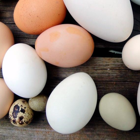 naked-eggs.jpg