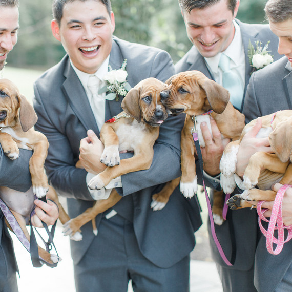 Groomsmen Pose with Puppies