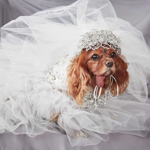 Dog Bridal Dress