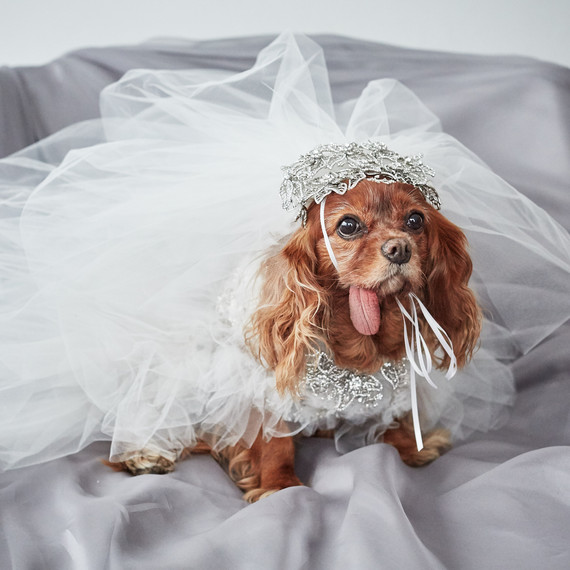 EXCLUSIVE: Get a First Look at Toast the Dog's Marchesa Wedding Dress! | Martha Stewart Weddings
