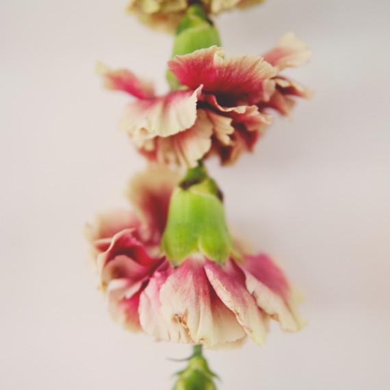 claire-thomas-bridal-shower-garden-diy-flower-garland-close-0814.jpg
