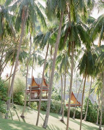 stacy brad wedding thailand palm trees