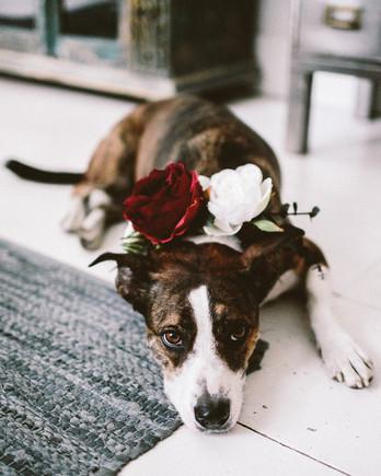 angie reed wedding dog
