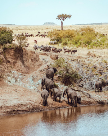 africa trip elephants other animals river bank